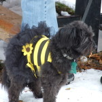 Libby The Bee