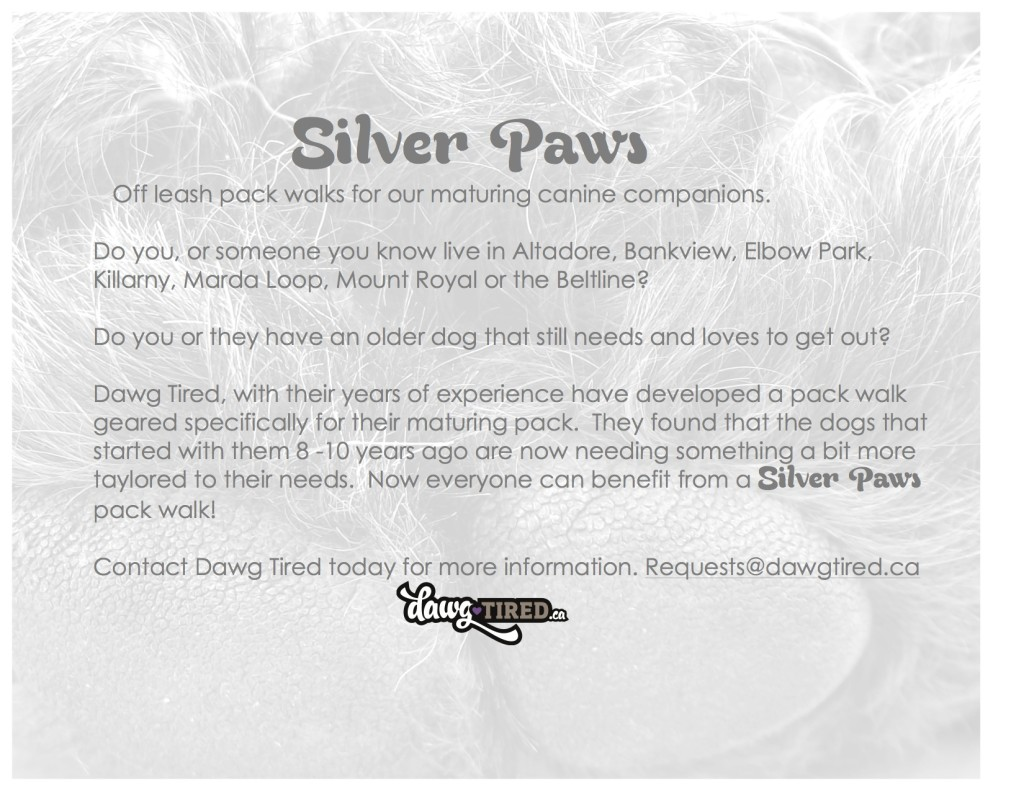Silver Paws